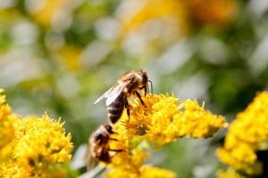 Prodej medu