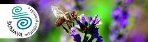Oddělky Langstroth 2/3 a Optimal 42 x 17 - včela na levanduli