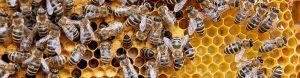 Včelařství Ratajovi-prodej medu a oddělků